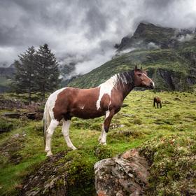 Vysokohorská pastva