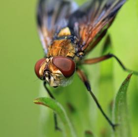 Barevná moucha