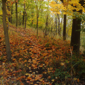 Podzimni les na vysypce na mostecku