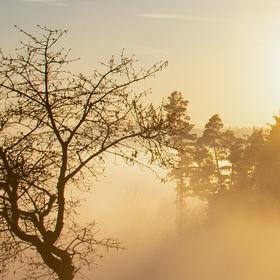 Listopadová mlha