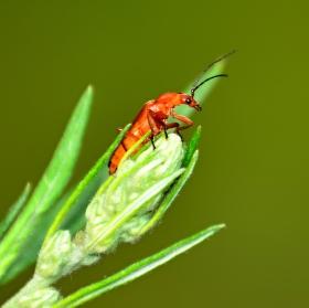 Oranžový broučekk