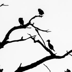 Najdi ptáky