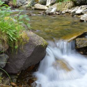 Potok v Malé Úpě