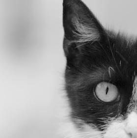 Černobílá kočičí