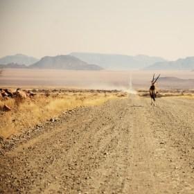Namibijský přímorožeč 2014