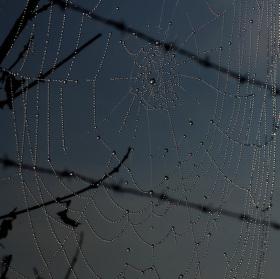 Pavučina na ostnatém drátu