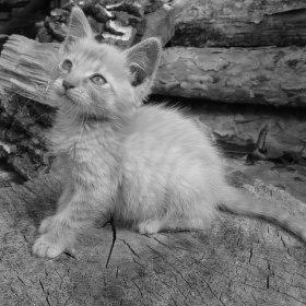 Zvědavé kotě