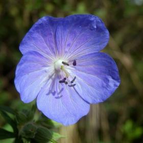 modrouček plevelíček :-)