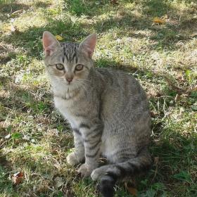 naše kočka Rozárka