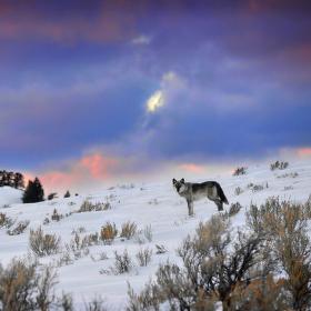 krajina kde vlci dávají dobrou noc