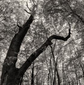 Lužní les XIII - Přírodní rezervace Rezavka