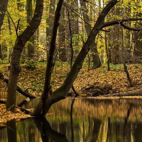 Lužní les XIV - Přírodní rezervace Rezavka