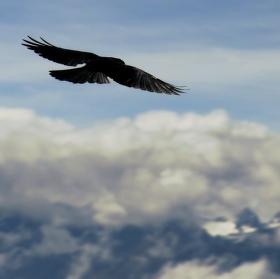 let do oblak