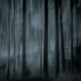 Tajemství lesní cesty