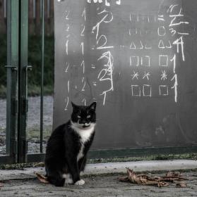 Kočičí počty