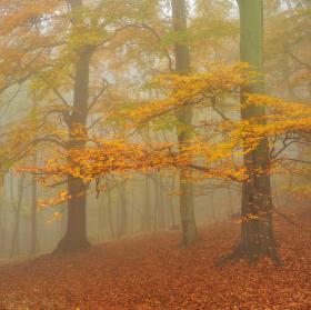 Mlhavý den