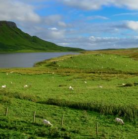 Ovce, kam se podíváš