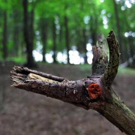 Lesní zvěř