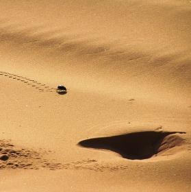 Scarabeus na písku