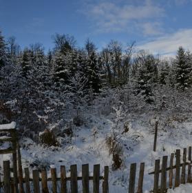 Lesní školka pod sněhem