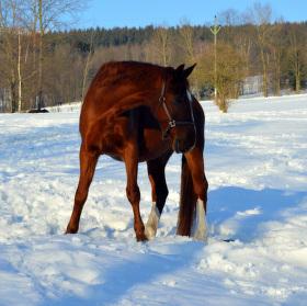 koňská zima