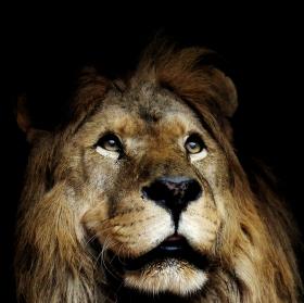 Král!