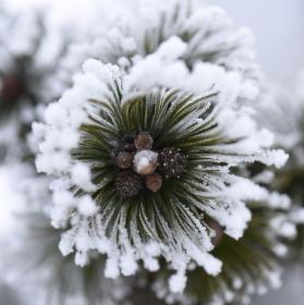 Zima pod drobnohledem