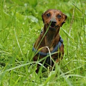 Quido v trávě