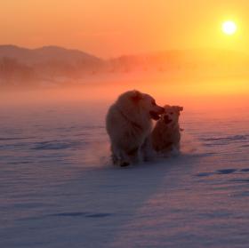 Čuvači na snehu