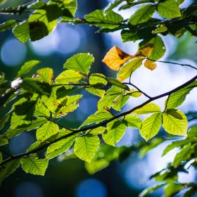 Podzimní u Blaníku