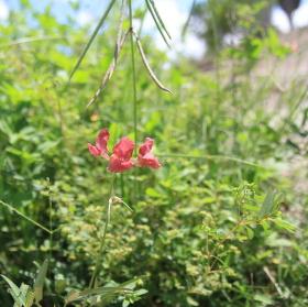 Osamělá květinka