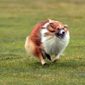 S větrem o závod