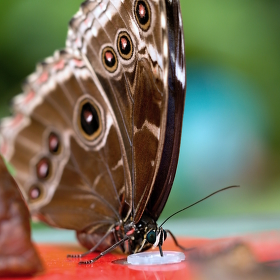 Motýl si sosá :-)
