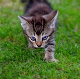 Sebejisté kotě