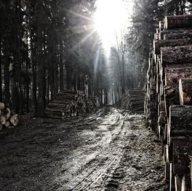 trochu dřeva v lese