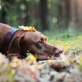 podzimní odpočinek