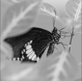 Na motyli farme..