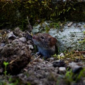 Zvědavej myšák ;-)