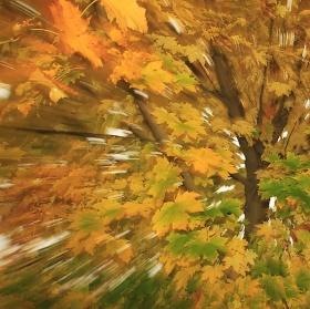 Pohled do koruny stromu