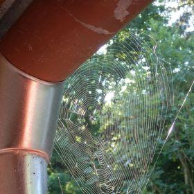 Mistr pavouk