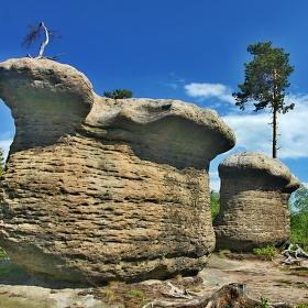 Polické houby