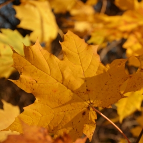 Podzim, slunce, i stín