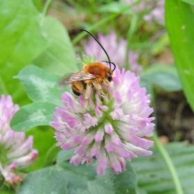 Hmyz s tykadly