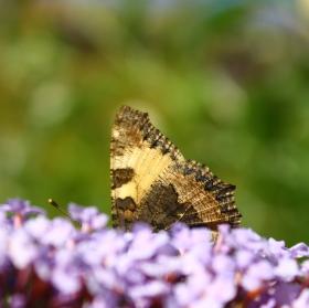 Motýlí schovka