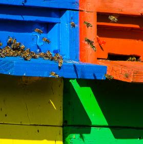 SHARP RGBY QUATTRON pre včielky