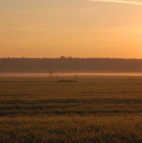 Luční ráno