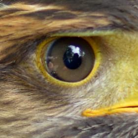 Ptačí model