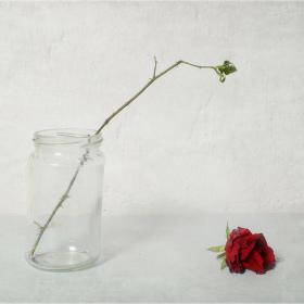 růže...