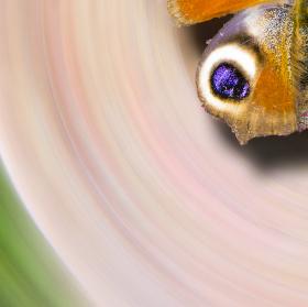 Motýl ve vývrtce