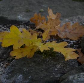 Podzim....